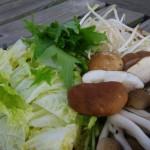 秋まき白菜の種まき栽培、プランターを使った初心者でもできる育て方
