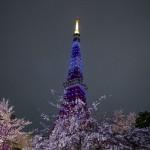 東京の夜桜スポット!おすすめデートコースランキング!