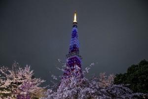 東京の夜桜_1