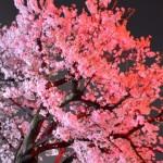 北海道の桜の名所はココ!ランキングを要チェック!