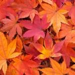 秋の行楽!広島のおすすめスポットはココ!