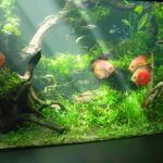 熱帯魚の水槽を掃除する方法は?どんなことに注意が必要?