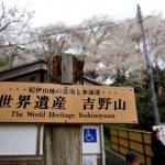 吉野山の桜の見頃は毎年いつ頃?具体的にどんな桜があるの?