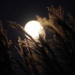 お月見に最適な「中秋の名月」は何月のいつ頃に見られるの?