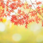 10月にぴったりな童謡は?みんなで歌う秋の定番曲はコレ!
