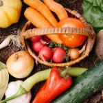 9月に植える主な野菜は?植え付けする際の手順は?