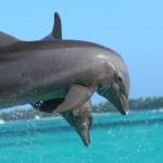 シャチとイルカの違いを理解しよう!実はクジラとも関係あり!?